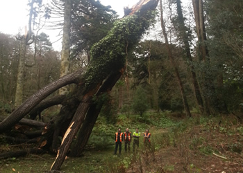 Darwin Tree Specialists provide tree services in Woodland & Forestry