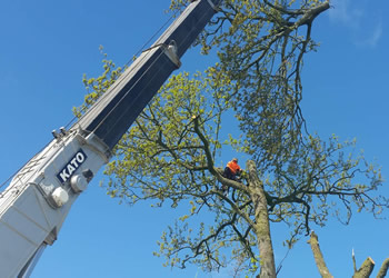 Commercial and Public Works Tree Services