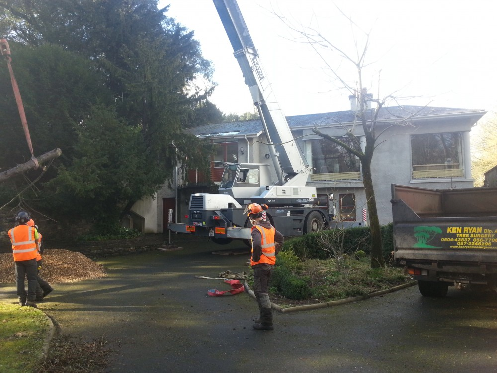 Tree removal in tight spaces
