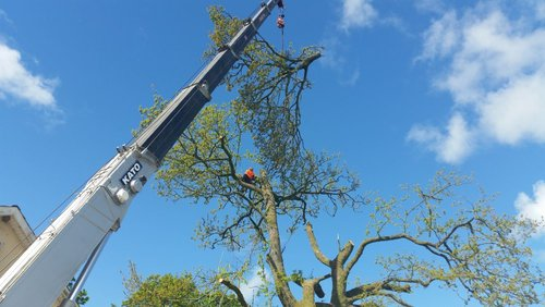 Dangerous Tree Removal